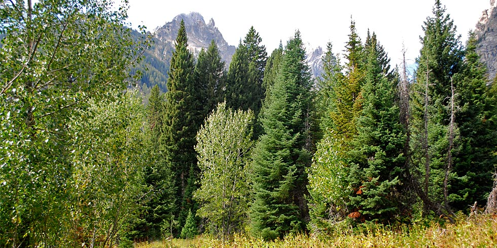The park's forests contain a surprising number of both coniferous and deciduous tree species.
