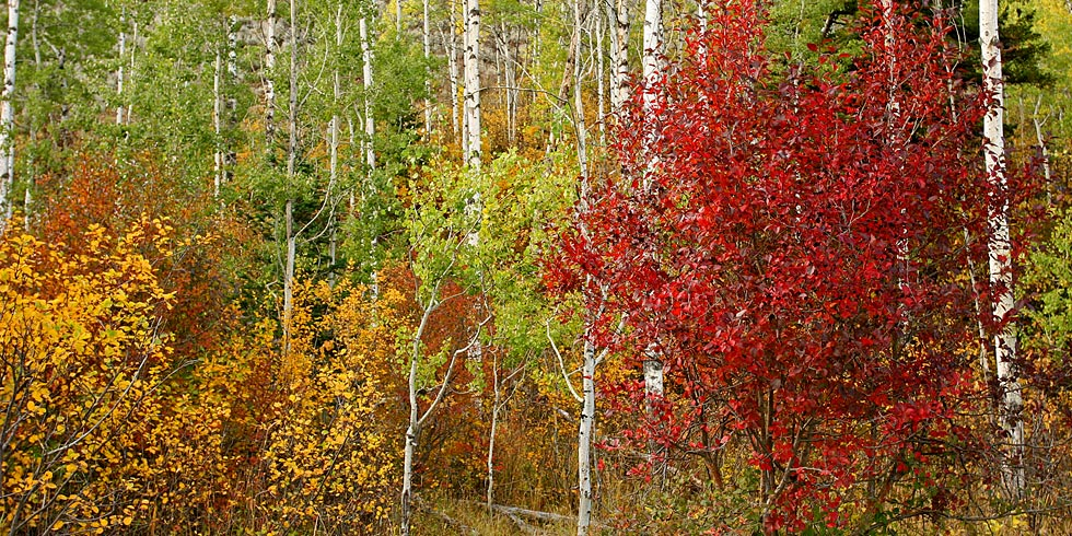 Autumn colors come alive with color to enhance the beauty of the park's forests.