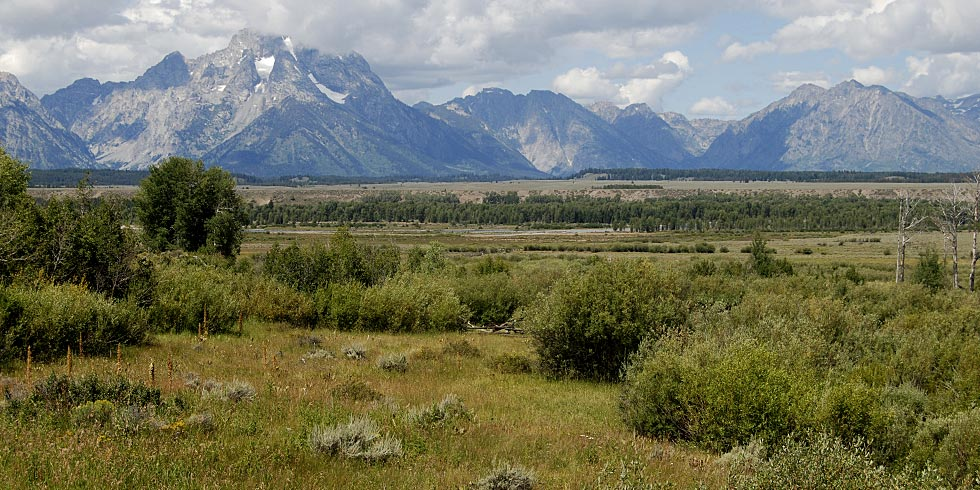 Meadows are interspersed throughout sagebrush, forest, wetland and alpine communities.