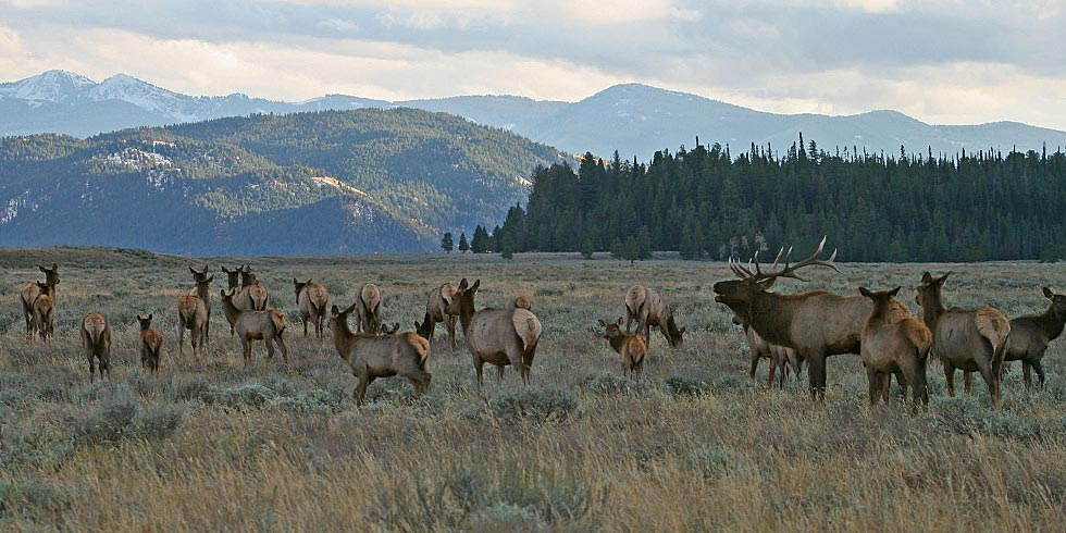 Meadows become important areas for elk during the fall rut. (Photo credit: Dan Ng)