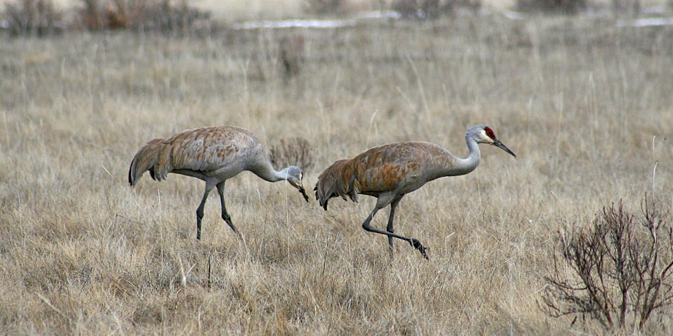 Look for sandhill cranes feeding in the park's wet meadows.