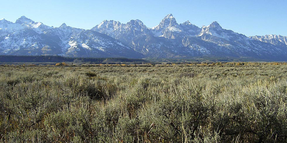 The sagebrush community is the most widespread community in Grand Teton National Park.
