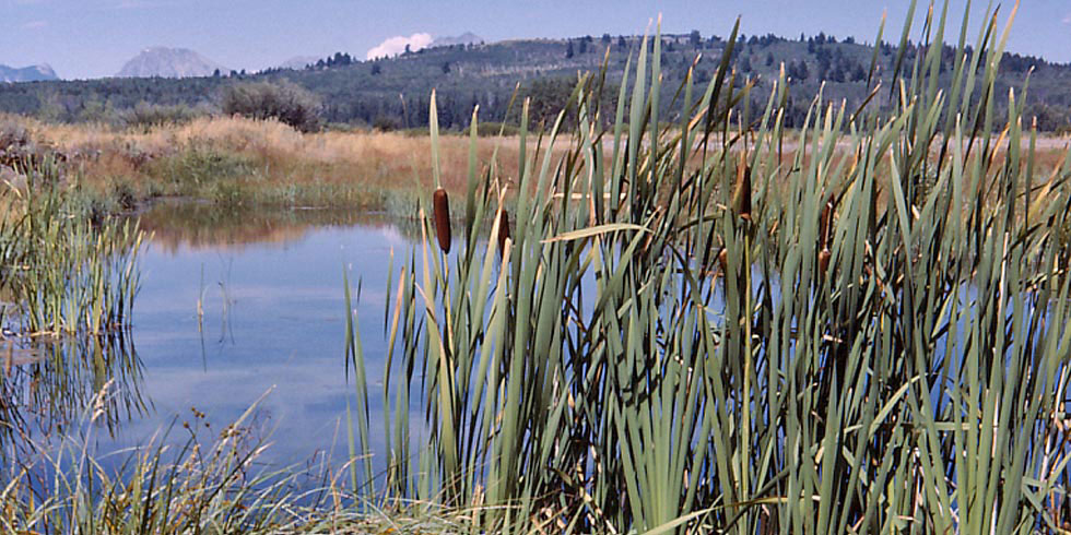Wetland communities are some of the most important communities for wildlife in the park.