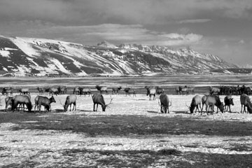 National Elk Refuge created.